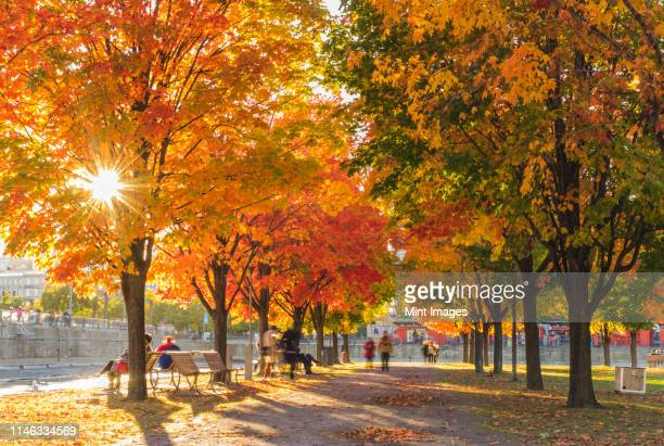 people in park in autumn - montréal stock pictures, royalty-free photos & images