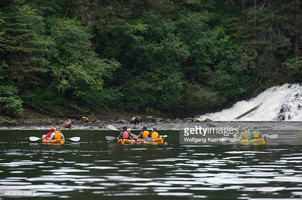 People in sea kayaks watching brown bears fishing for salmon in waterfall at Pavlof Harbor in Chatham Strait Chichagof Island Tongass National Forest...