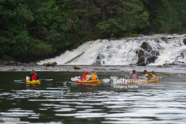 People in sea kayaks watching brown bears fishing for salmon in waterfall at Pavlof Harbor in Chatham Strait, Chichagof Island, Tongass National...