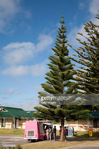 People line up in shade of tree to purchase ice cream from vehicular vendor, Western Australia, Australia