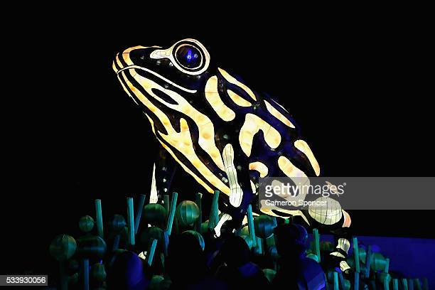 People look at a Corroboree frog light sculpture during a media preview of Vivid Sydney illuminated displays at Taronga Zoo on May 24 2016 in Sydney...