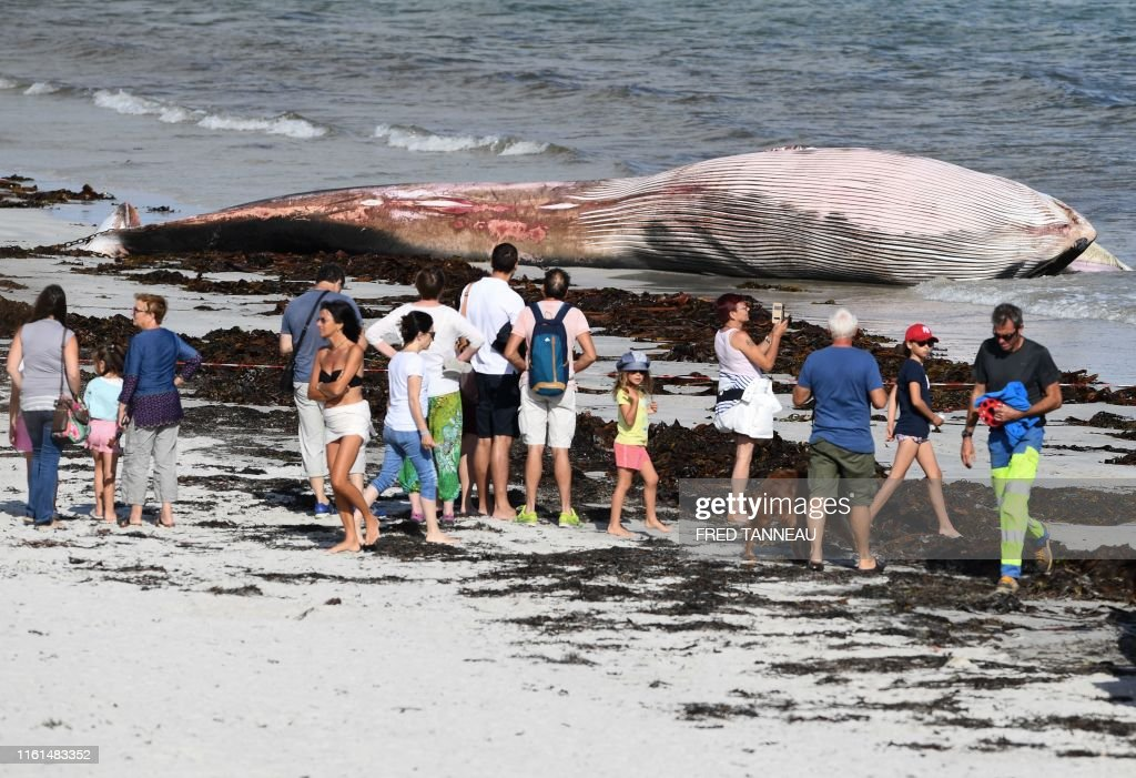 FRANCE-SEA-ENVIRONMENT-ANIMAL-WHALE : News Photo