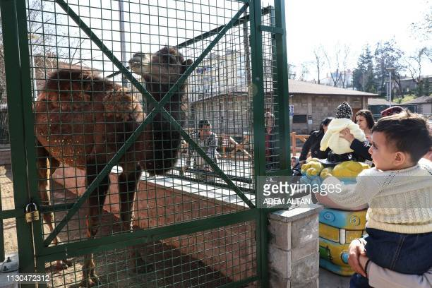 People look at a dromedary at the Kecioren Municipality Pet Park in Ankara on March 14 2019