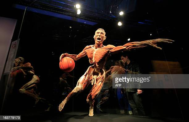 People look at a plastinated body staged as a basket ball player displayed at the Body Worlds and the Cycle of Life exhibition by German anatomist...