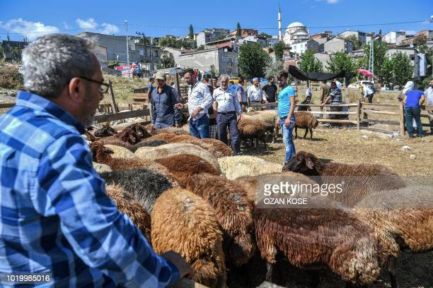 People look at a sheep herd at a market in Istanbul on August 20 ahead of the annual Muslim holiday of Eid alAdha or Festival of Sacrifice Muslims...