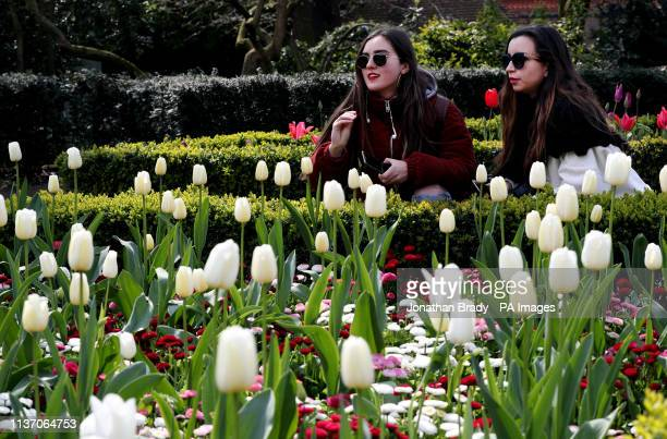 People look at blossoming tulips in Holland Park London