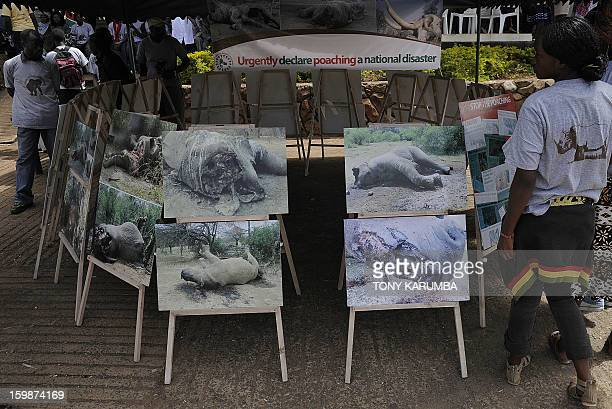 People look at photos of elephants and rhinos mutilated for their tusks and horns displayed by animal rights activist group Kenyans United Against...