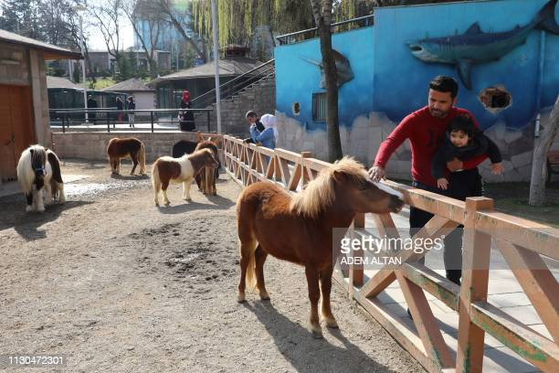People look at Shetland poneys at the Kecioren Municipality Pet Park in Ankara on March 14 2019