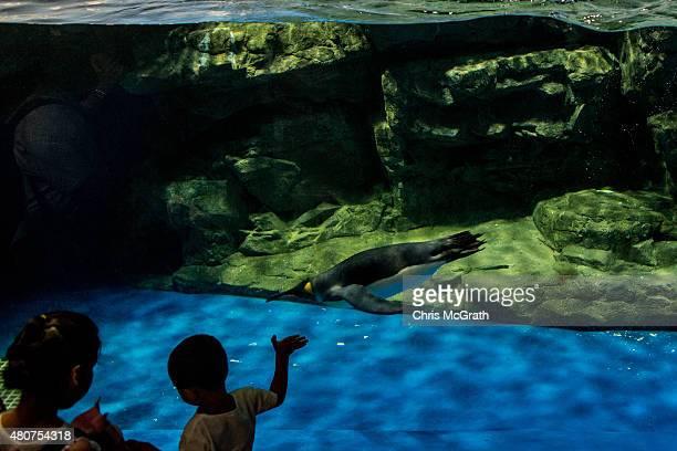 People look at the Penguin display at the EPSON Aqua Park Shinagawa on July 15 2015 in Tokyo Japan The EPSON Aqua Park Shinagawa previously known as...