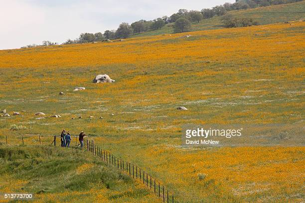 People look at wildflowers along California State Route 223 on March 4 2016 west of Tehachapi California Despite hopes that the major El Nino effect...