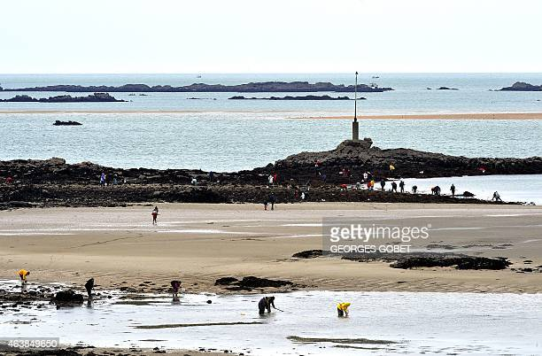People look for mussels on the beach of SaintMalo during low tide on February 19 2015 AFP PHOTO GEORGES GOBET