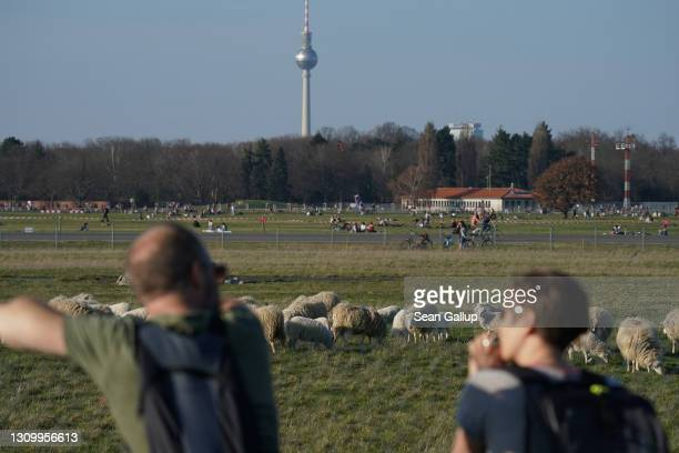 People look out at skudde sheep grazing at Tempelhofer Feld, the public park that was once Tempelhof Airport, as the broadcast tower at...