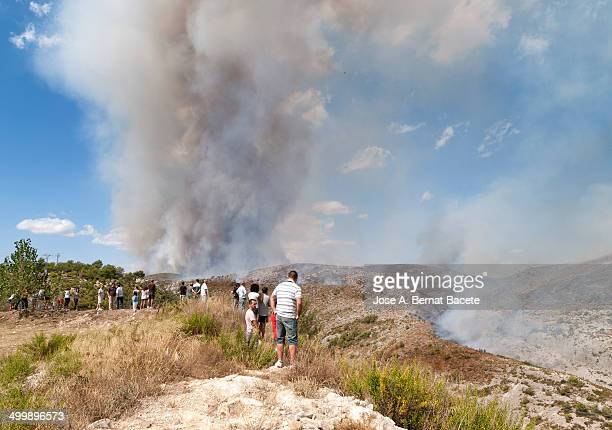 People looking at a great column of smoke of a forest fire that advances got out of control between a zone of deep ravines and near a people...