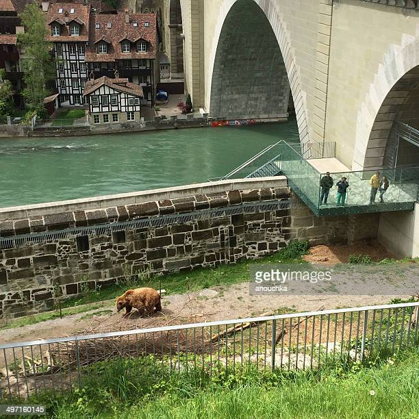 people looking at famous bears in barenpark, berne - bern stock pictures, royalty-free photos & images