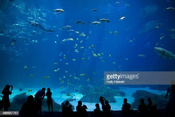 People looking at fish in the Georgia aquarium