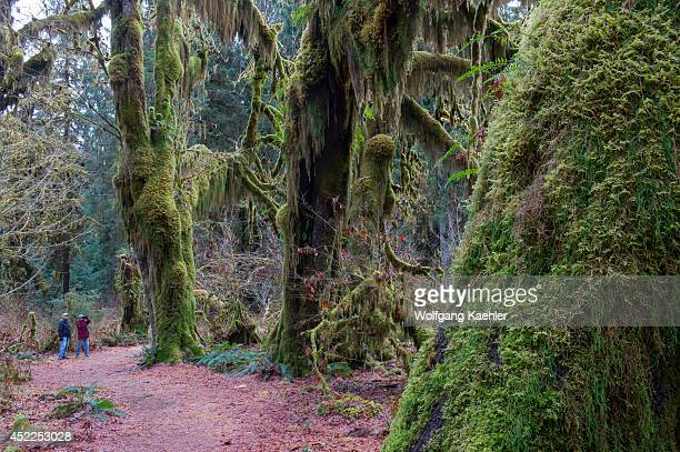 People looking at maple trees covered with mosses at the Hall of Mosses in the Hoh River rainforest Olympic National Park Washington State United...