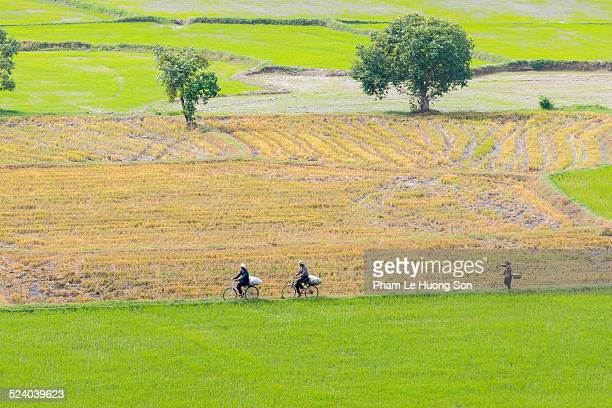 People moving on the paddies of rice