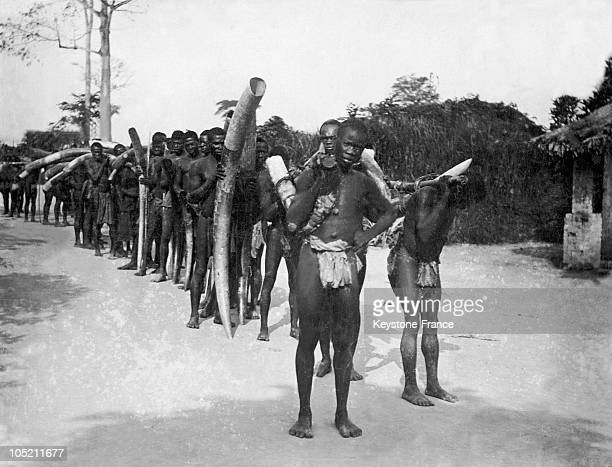People Of Cameroon Carrying The Tusks Of Elephants To A Local Factory Between Approximately 1910 And 1950.