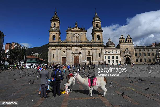 People offering Llama rides for children on Plaza de Bolivar in La Candelaria the old town of Bogota Colombia with the Archbishopric Cathedral of...