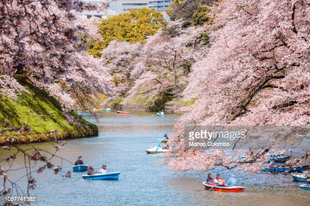 people on boats enjoying sakura in tokyo, japan - hanami stock pictures, royalty-free photos & images
