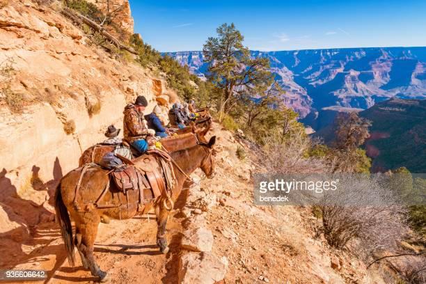 people on mule ride adventure tour in grand canyon arizona usa - mula imagens e fotografias de stock