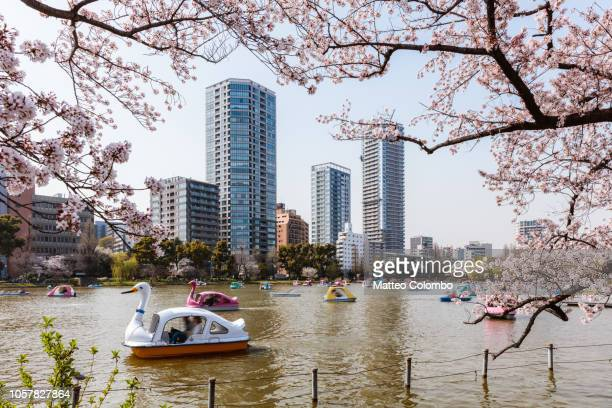 people on pedal boats during cherry blossom, ueno park, tokyo - ueno park stock photos and pictures