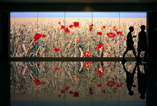 People passing field of wheat with poppy flowers display - gettyimageskorea