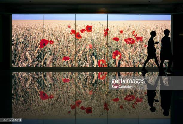 people passing field of wheat with poppy flowers display - projection equipment stock pictures, royalty-free photos & images