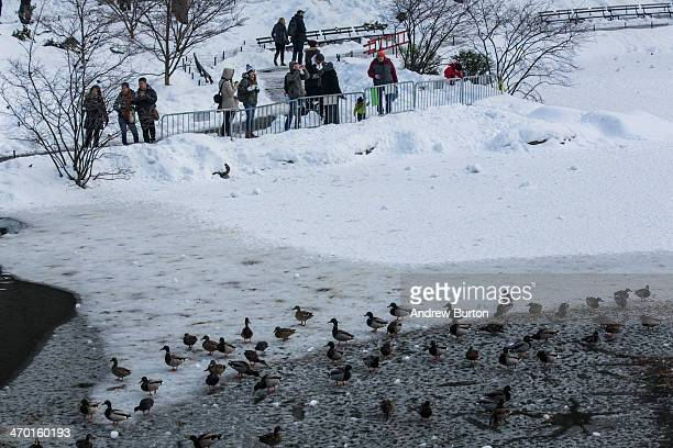 People photograph ducks walking on ice in Central Park on February 18 2014 in New York City The city was hit with its 22nd day of snowfall making for...