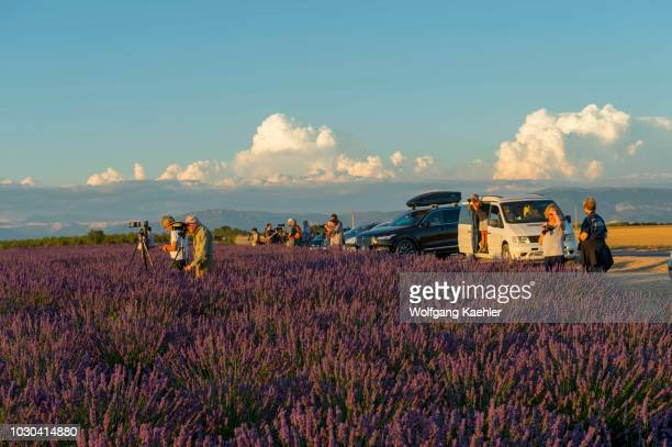 People photographing in the evening light a lavender field on the Valensole plateau near Digne-les-Bains and the Verdon gorges in the...