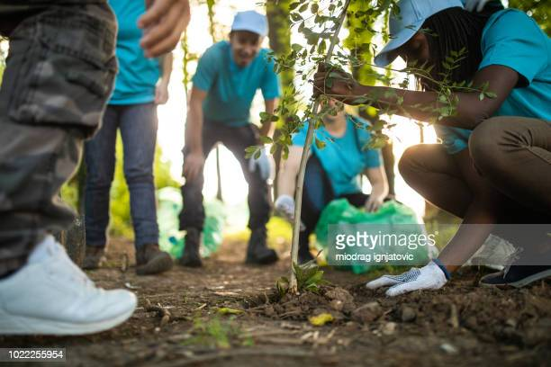 people planting tree in park - plant stock pictures, royalty-free photos & images