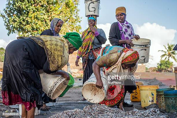 People prepare anchovies locally called Dagaa for drying at Mkokotoni village Zanzibar Local people use dagaa for preparing food as its much cheaper...
