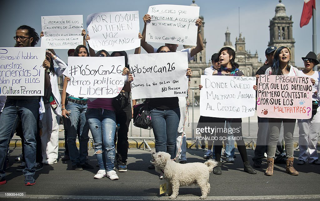 People protest after the police caught dozens of stray dogs thought to be involved in the death of four people in Mexico City, on January 12, 2013. Animal rights activists have voiced doubts that dogs are to blame for the death of at least four people in a country torn by runaway crime, but prosecutors insist that only canines could have caused such carnage, with bones exposed and body parts bitten off. Hundreds of Mexico City residents took their dogs to mobile sterilization units Thursday as the city stepped up a campaign to reduce the number of street dogs after a string of deadly attacks. The city prosecutor's office said stray dogs mauled four people to death, and perhaps two more victims, in the past two weeks.