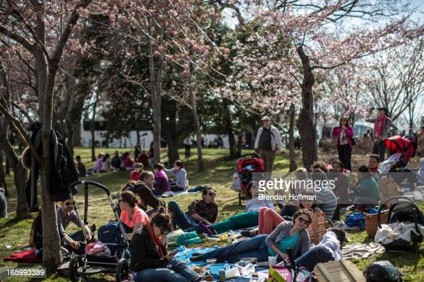 People relax around the Tidal Basin where cherry trees are just beginning to bloom on April 7 2013 in Washington DC The blossoms are late this year a...