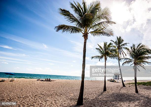 people relaxing on a beach, fort lauderdale, usa - anna cabana photos et images de collection