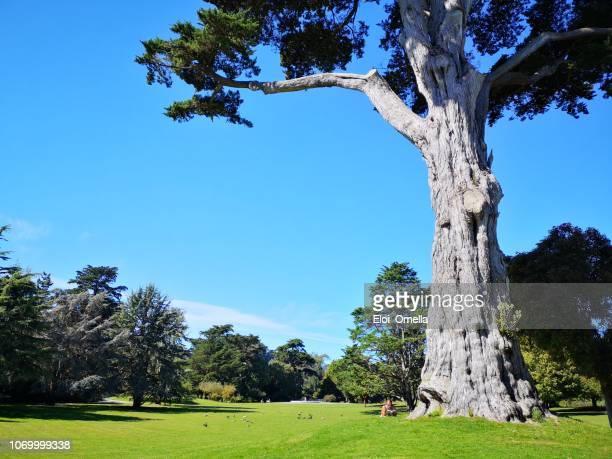 gente descansando en el parque golden gate de san francisco, california - san francisco california fotografías e imágenes de stock