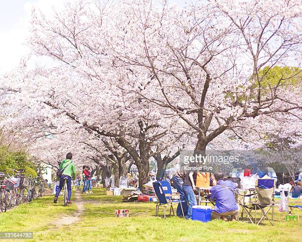 People resting under cherry blossom