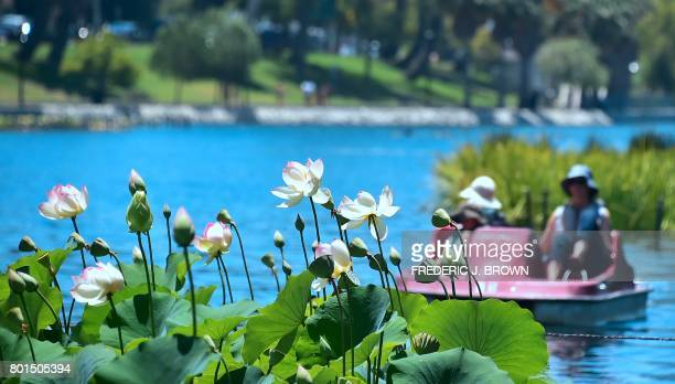 People ride a paddle boat near a fountain in the lake at Echo Park where Lotus flowers are nearing full bloom amid an ongoing southern California...