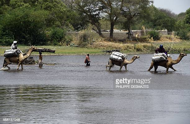People rides camels as they cross a branch of Lake Chad on April 6 2015 in N'Gouboua which was attacked by Islamist group Boko Haram on February 12...