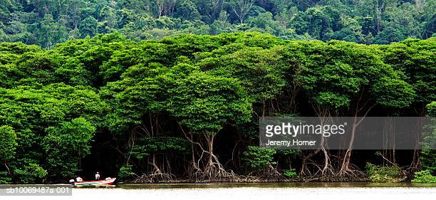 people riding boat in tropical rainforest - brunei stock pictures, royalty-free photos & images
