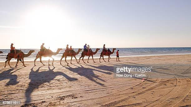 People Riding Camels On Beach During Sunny Day