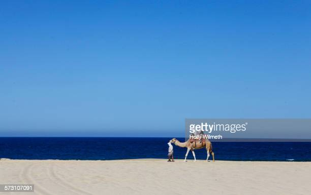 people riding on camel on beach - cabo san lucas stock pictures, royalty-free photos & images