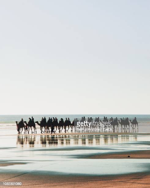 people riding on camels at beach against clear sky - camel active stock-fotos und bilder