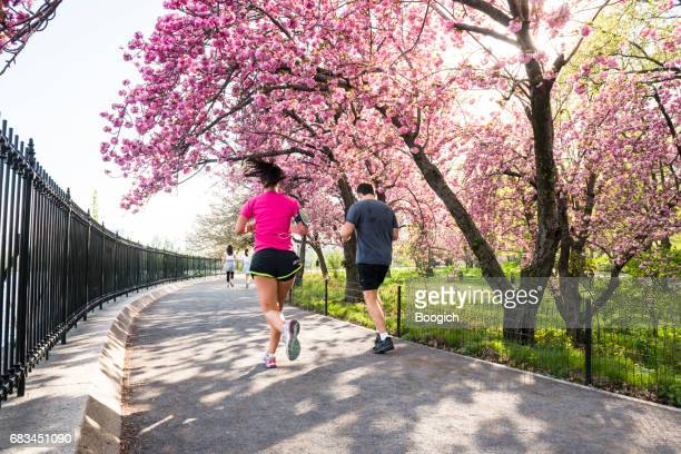 People Run by Blooming Cherry Blossom Trees Central Park NYC