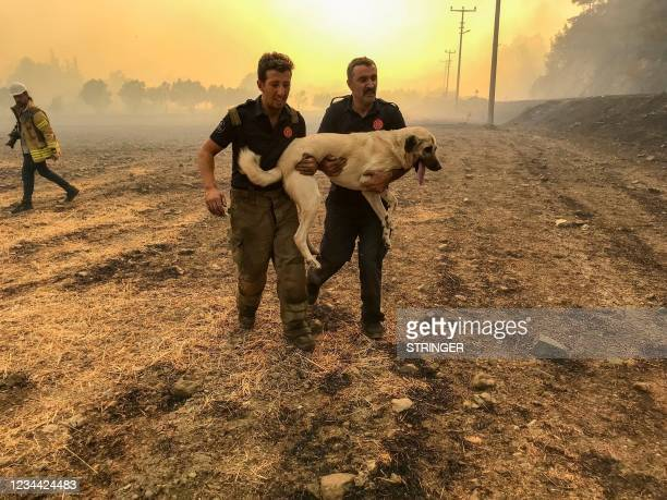 People save a shepherd dog from a beach during a forest fire on August 2, 2021 in Mugla, a Marmaris' district, as Turkey struggles against its...
