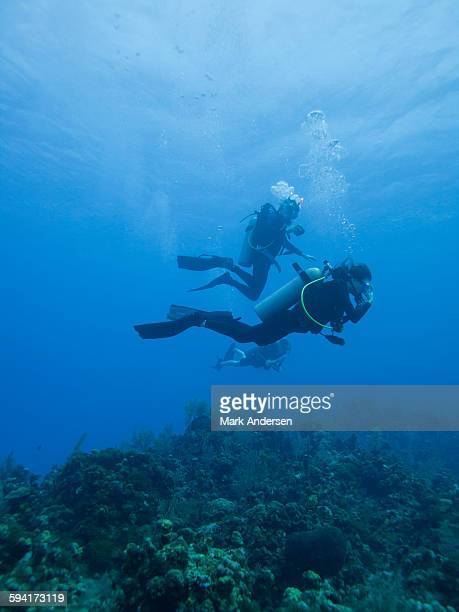 people scuba diving underwater - sea swimming stock photos and pictures