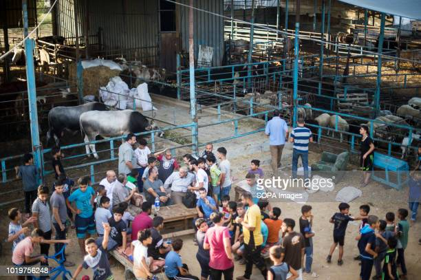 People seen at the cattle market before Eid alAdha in the east of Jabalya refugee camp Eid alAdha is celebrated throughout the Islamic world as the...