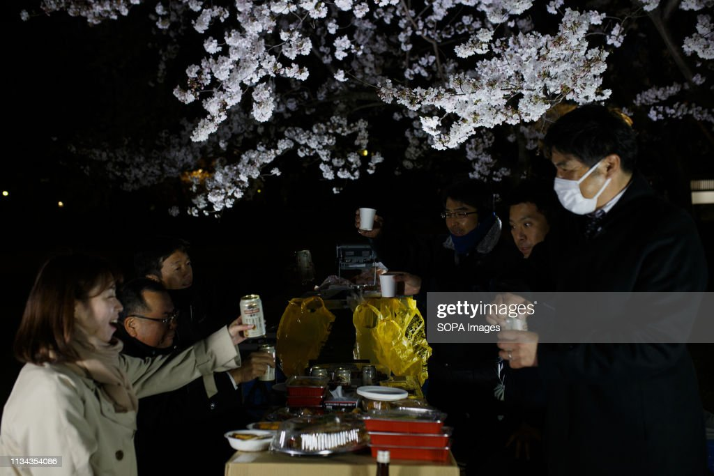 People seen enjoying a cherry blossom view party at a park,... : News Photo
