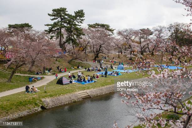 People seen enjoying cherry blossom view during the festival Spring arrives and 800 Sakura cherry trees spread in the area around Okazaki Castle...