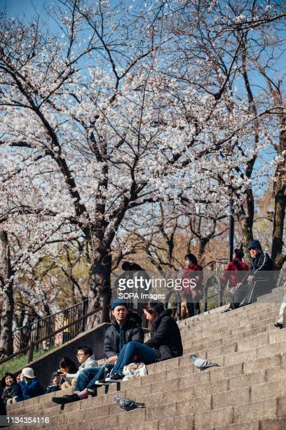 People seen enjoying cherry blossom views at yamazaki river nagoya Aichi prefecture Japan The Cherry blossom also known as Sakura in Japan normally...